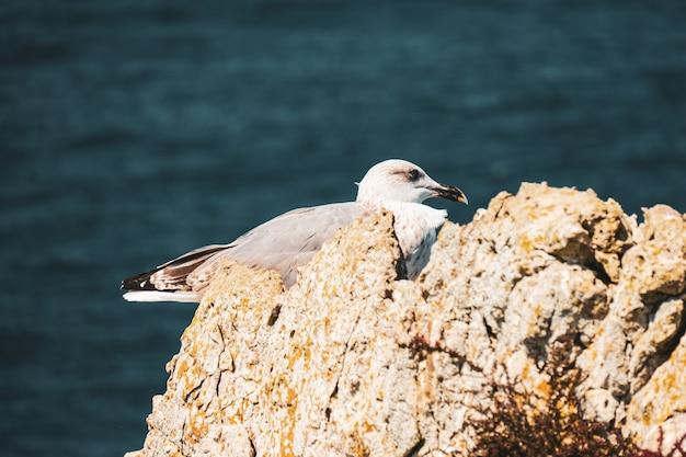 晴れた日に海の近くの岩の上に腰掛けたカモメ