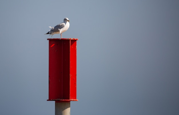 Gull perched on a red mailbox