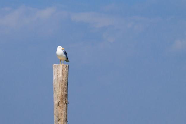 「デルタ・デル・ポー」の柵の上に立つカモメ。イタリアの自然。バードウォッチング