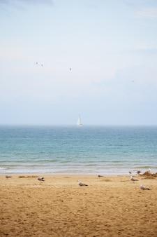 Gulls on the beautiful sandy beaches. bulgaria nessebar