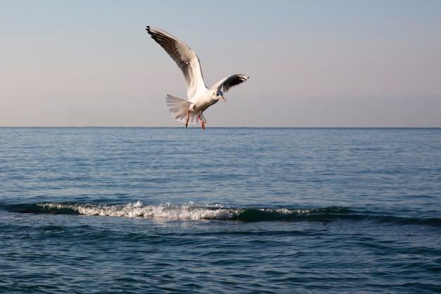 カモメは夜明けに海の上を飛ぶ。海と空を背景に白い鳥。自由の概念