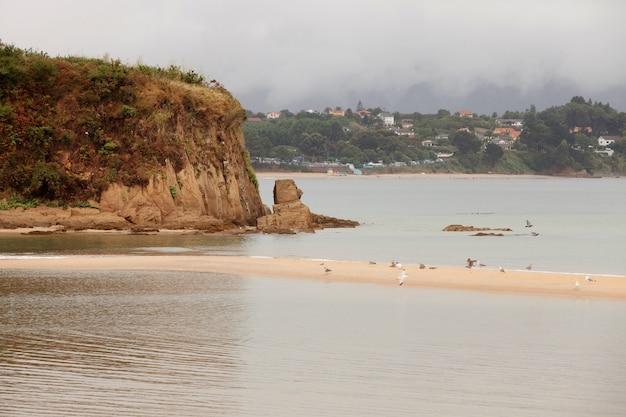 Gulls on a sandy islet