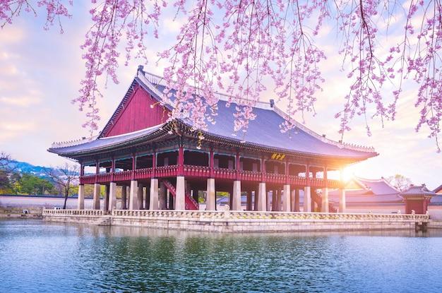한국 서울의 봄철 벚꽃 나무가있는 경복궁.