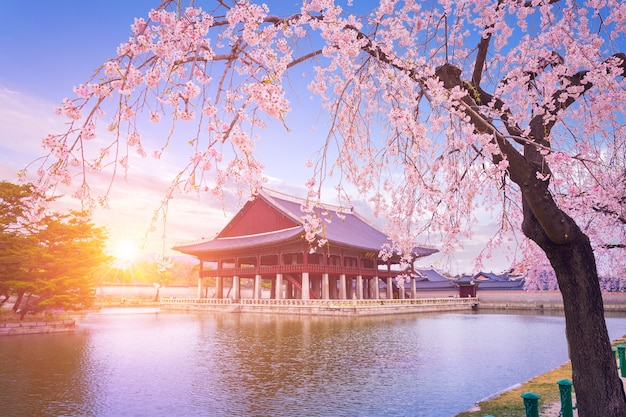 서울의 봄철 벚꽃 나무가있는 경복궁