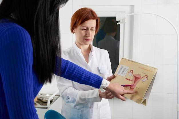 산부인과 의사는 젊은 여성 환자에게 자궁으로 사진을 보여주고 사무실에서 의료 상담 중에 여성 건강의 특징을 설명합니다.
