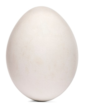 白い背景の前でグリフォンのハゲタカgyps fulvusの卵