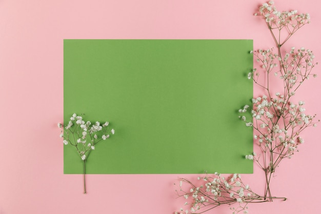 Gypsophila flowers on blank green and pink background