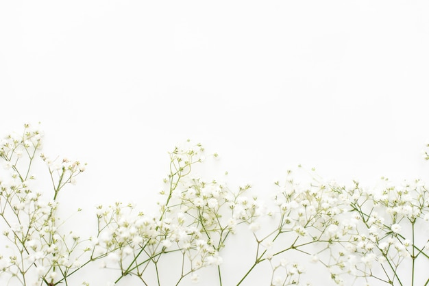 Gypsophila flowers on white background. delicate background for cards
