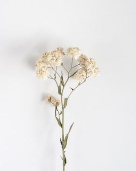 라든지 작은 흰색 마른 꽃 테이블, 평면도