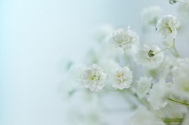 Маленькие белые цветы (gypsophila paniculata) размыты, селективный фокус.