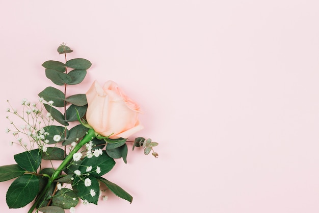 Gypsophila and rose flower on the corner of the pink background