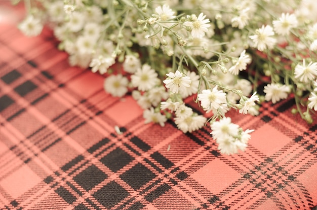 Gypsophila on scotch and the area for the relevant message.