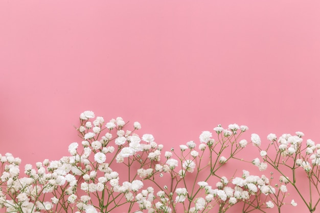 Gypsophila white baby's breath flower on pastel pink