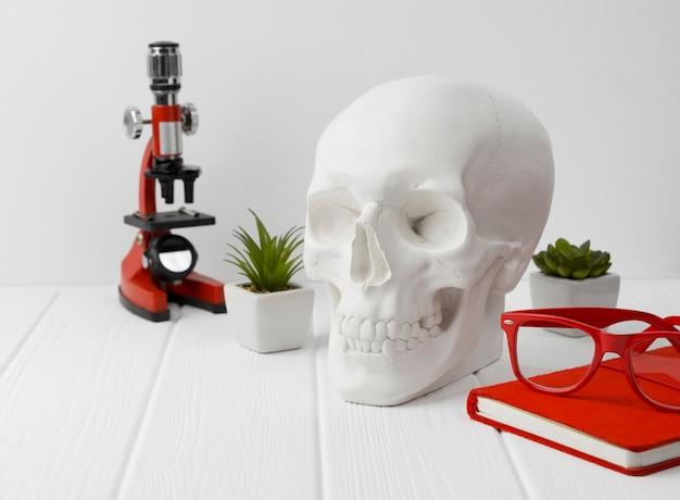 메모장, 빨간 안경, 현미경 및 흰색 나무 테이블에 식물 석고 인간의 두개골