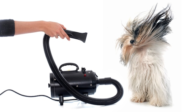 Hair dryer for dog