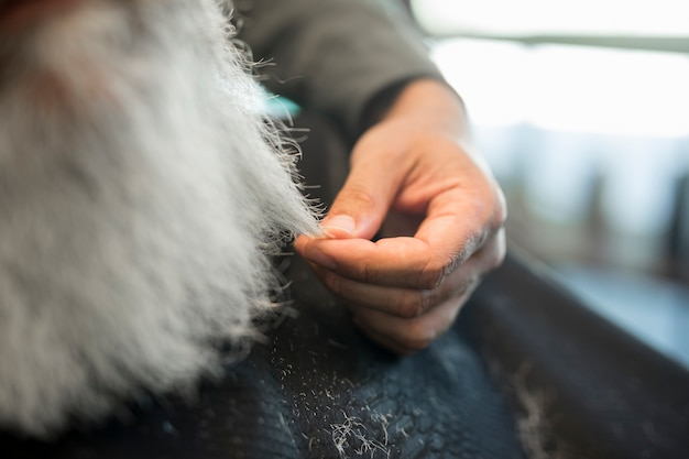 Hairdresser holding strand of gray hair client