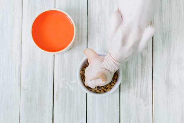 Голая кошка породы донской сфинкс с розовой обнаженной кожей ест сухую кошачью еду из миски на деревянном белом полу