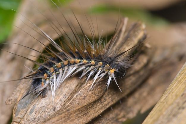 Волосатая гусеница. макро фотография