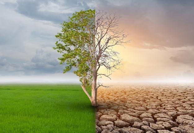 Полуживое и полуживое дерево, стоящее в областях ландшафта