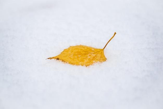 Half a birch yellow leaf in the snow