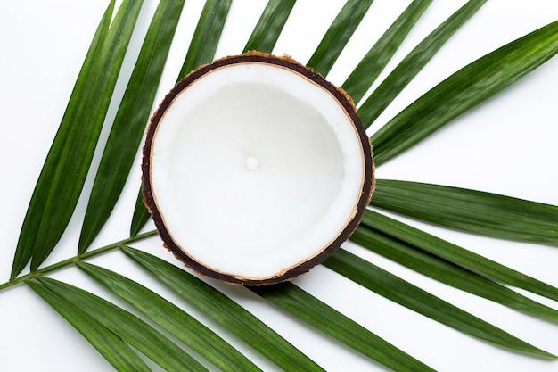 열대 야자 잎에 절반 코코넛. 평면도