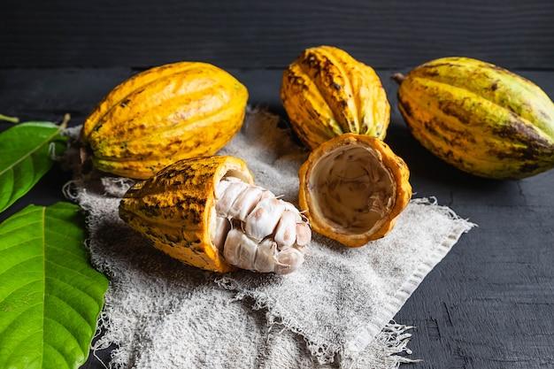 Half cut cocoa fruit close up