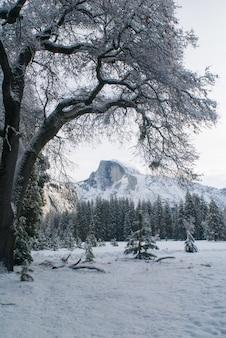 ストーンマンメドウのハーフドームと雪に覆われた木