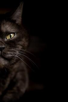 Половина лица черной кошки с желтыми глазами на темном фоне.