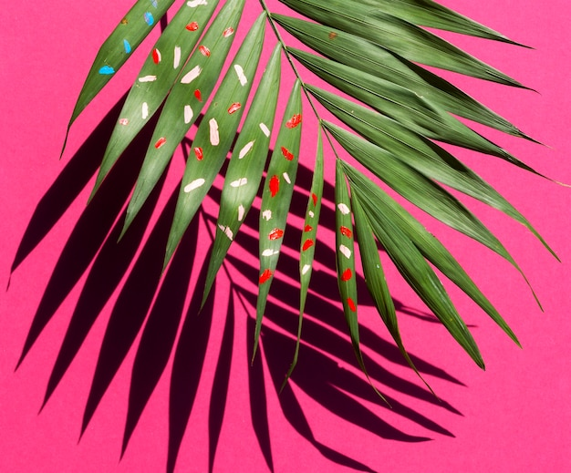 Half of fern leaf with shadow on pink background