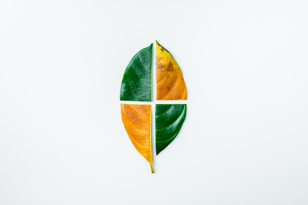Half of a green and brown dry leaves on white background. season concept.