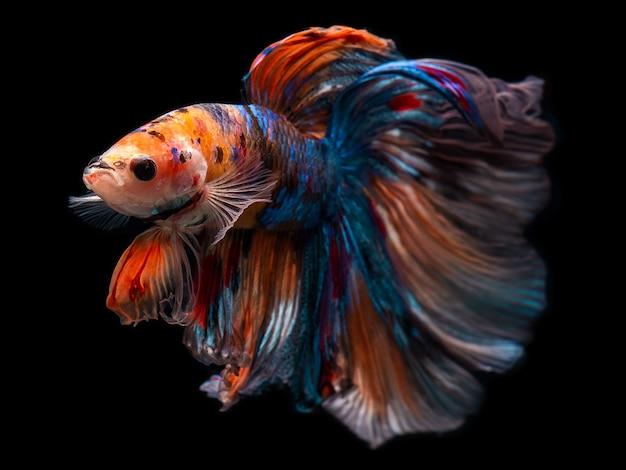 半月の巨人ベタシャムの戦いの魚