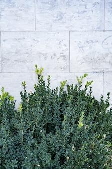 緑の葉と抽象的なセメントコンクリートの灰色と緑の壁の半分