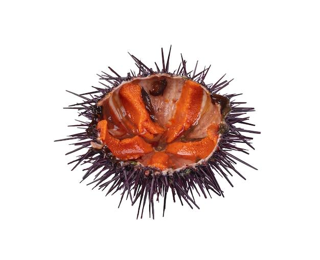 Half open sea urchin on white surface