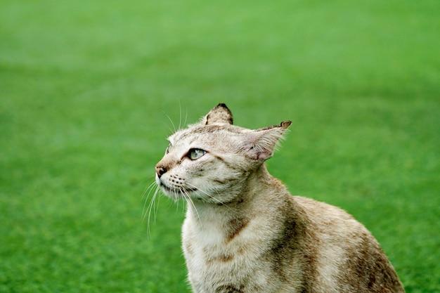 Половина портрет мило табби-кошка, глаза вид сбоку в зеленой траве на открытом воздухе.