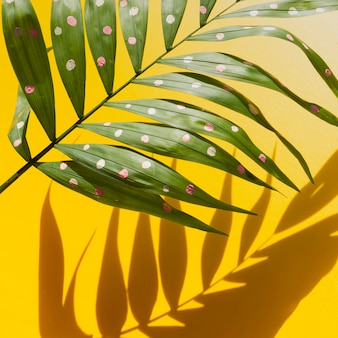 Half of tropical fern leaves and shadows