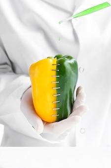 Half yellow and half green sweet pepper