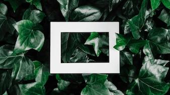 Hallow photo frame over green leaf plant
