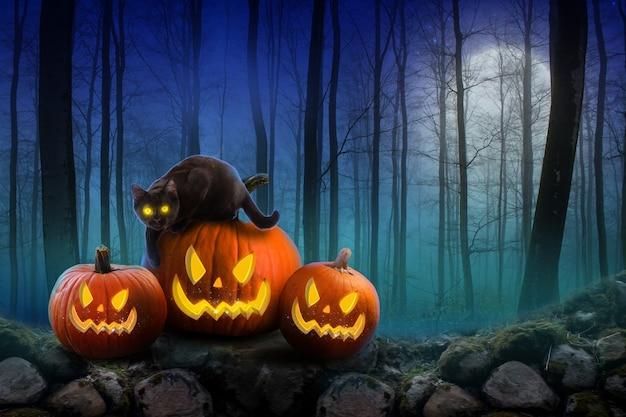 Хэллоуин фон страшные тыквы и темный лес с черной кошкой