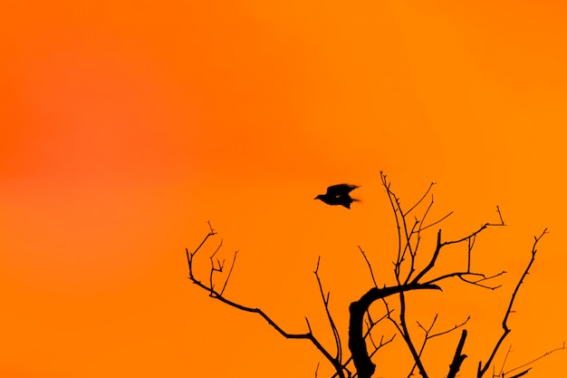 Halloween background with silhouette of a gnarled tree and a flying crow against the orange twilight