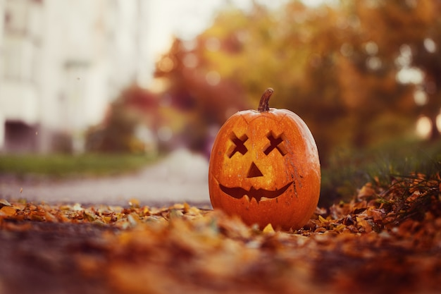 Halloween carved pumpkin in autumn leaves nature.