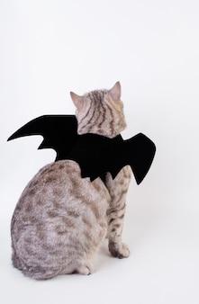 Halloween cat,portrait kitty wear black bat wing isolated on white background,back side