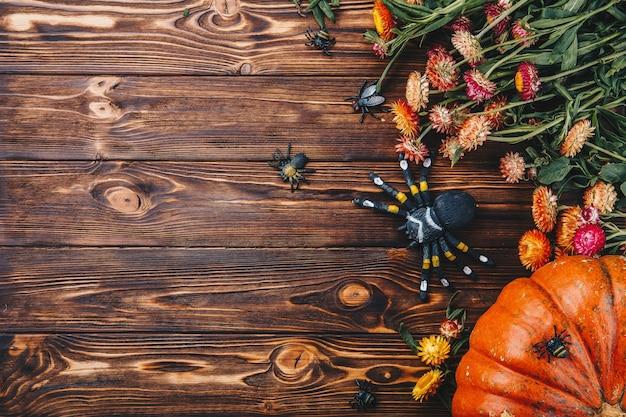 신선한 호박, 거미, 꽃이 있는 벌레가 있는 할로윈 컨셉입니다. 위의 트릭 오어 트릿 보기