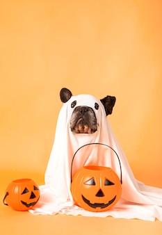 Собака на хеллоуин одета в простыню, замаскированная под костюм призрака с тыквами