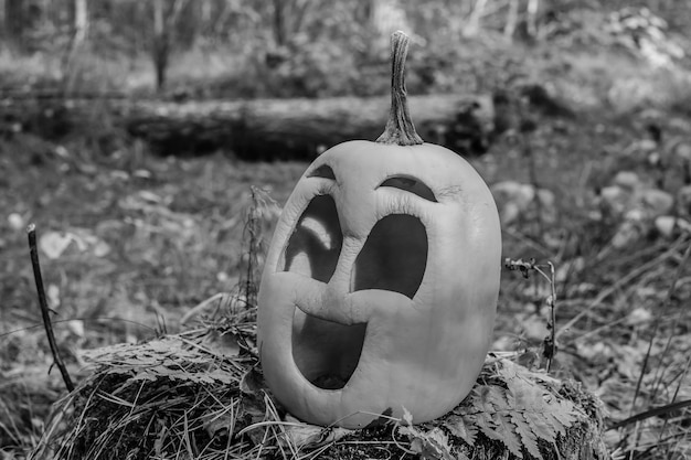 Halloween pumpkin in the autumn forest on an old stump black and white
