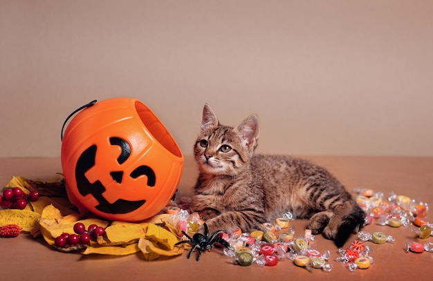 Halloween pumpkin jack-o-lantern and a kitten lying on candy on a brown background