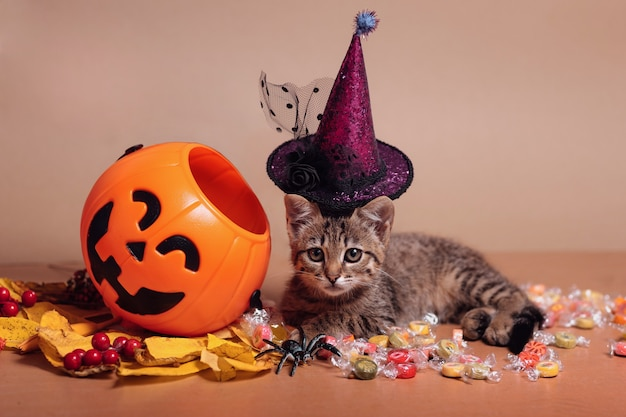 Halloween pumpkin jack-o-lantern and a kitten in witches hat lying on candy on a brown background