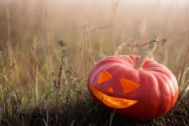 ハロウィンかぼちゃアウトドア