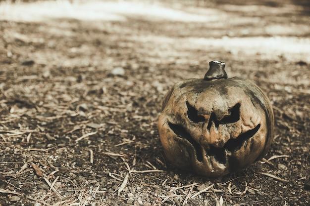 Halloween pumpkin placed on ground