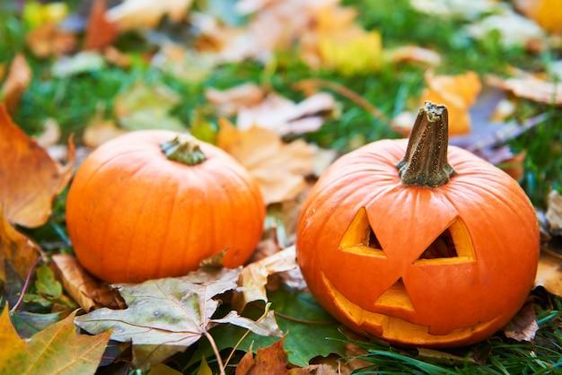 Zucche di halloween nella foresta d'autunno