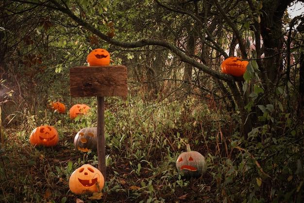 Halloween pumpkins in a forest